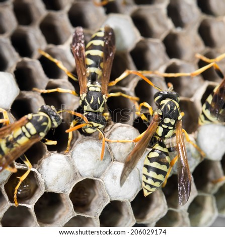 Wasps on comb - stock photo