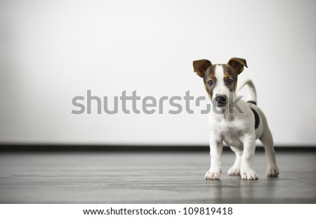Watch dog - stock photo