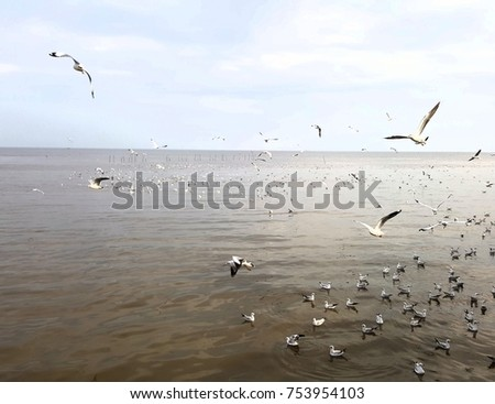 Watch the flock of migratory gulls. I fly to Thailand at Bangpoo.