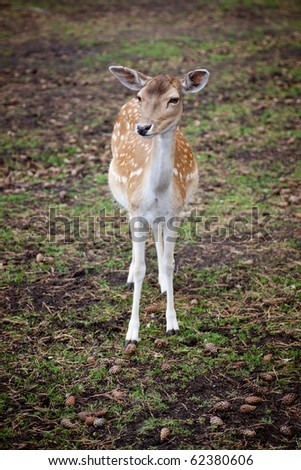 Watchful and very cute young deer in the forest - stock photo