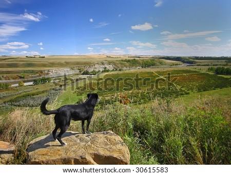watchful dog - stock photo