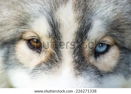 watching eyes by different color - stock photo