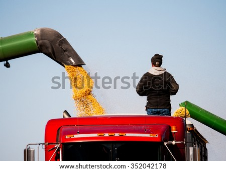 Watching the grain flow.  - stock photo