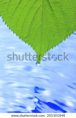 Water And Fresh Green Leaves - stock photo
