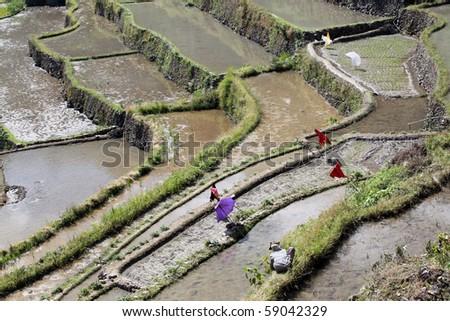Water and rice terrases in Batad near Banaue - stock photo