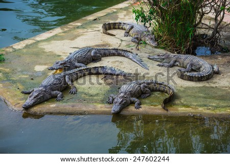 water bodies on the Crocodile Farm in Dalat. Vietnam - stock photo