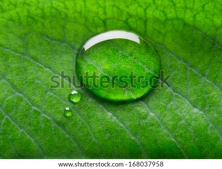 Water bubble talk on green leaf background - stock photo