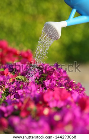 Water can watering a beautiful pink flowers with a green unfocused background - stock photo