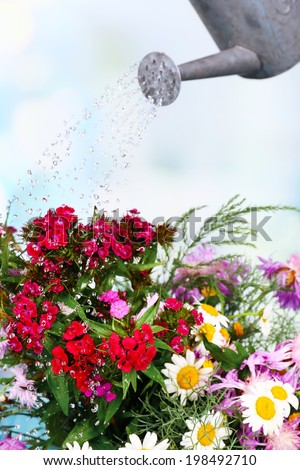Water can watering flowers on bright background - stock photo