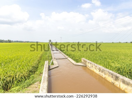 Water canal for paddy rice field irrigation with blue skies - stock photo