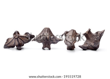 Water chestnut on white background - stock photo
