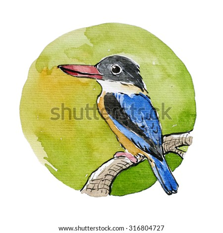 Water Color Bird, Black-capped Kingfisher