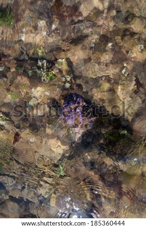 water corals - stock photo