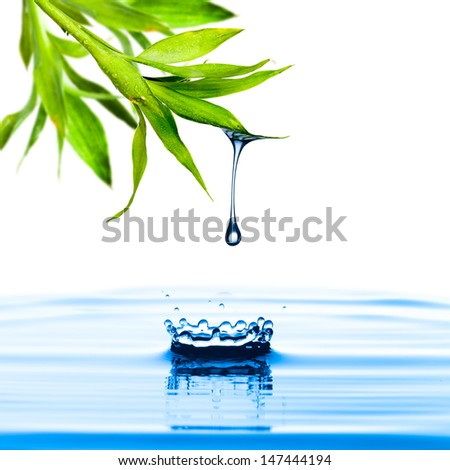 Water drop from bamboo leaf with white background - stock photo