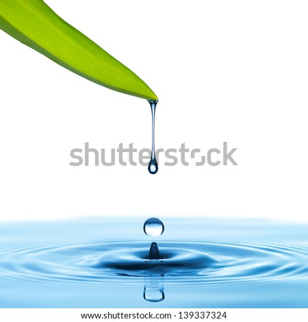 Water drop from green leaf on white background - stock photo