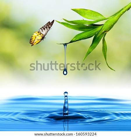 Water drop from Green Leaf with butterfly - stock photo
