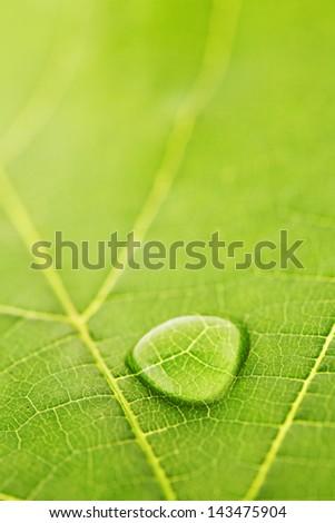 Water drop on fresh green leaf macro - stock photo