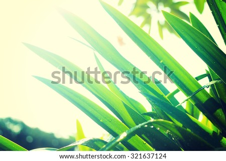 water drop on fresh nature green leaf ,morning sunshine-instagram filter - stock photo