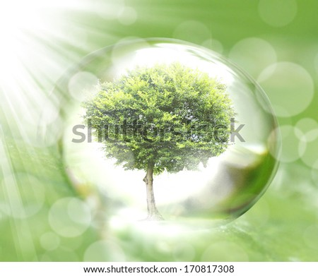 water drop on the leaves  - stock photo