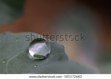 Water droplet of a leaf