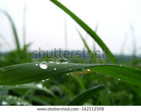 water droplets II                - stock photo