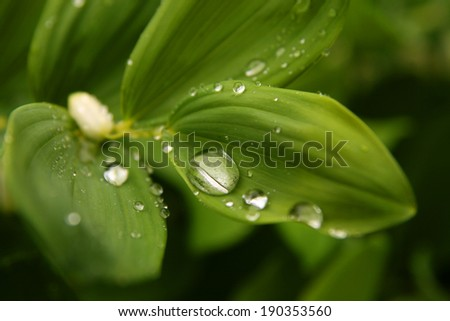 Water droplets on a green leaves - stock photo