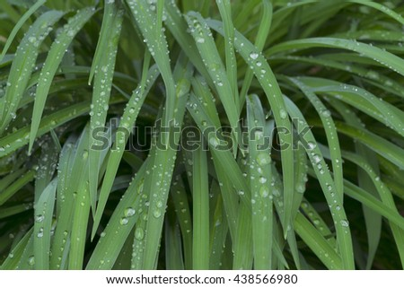 water droplets on green grass  - stock photo