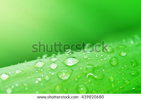 Water droplets on green leaf, Beautiful natural background, Abstract green background - stock photo