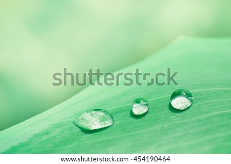 Water droplets on green leaf, Beautiful natural background. Soft tone - stock photo