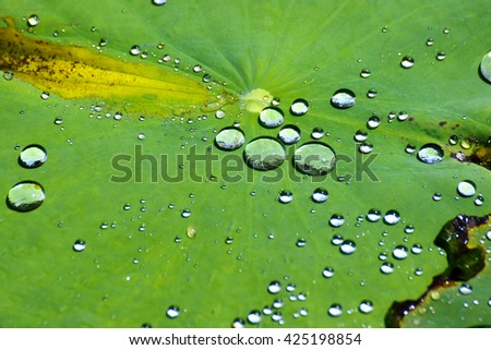 Water droplets on Lotus leaf - stock photo