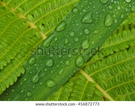 Water droplets on the leaves of a plant close up
