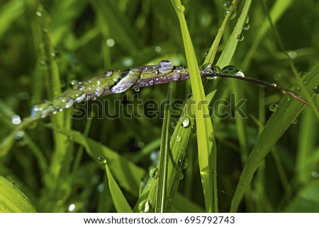 Water drops are on the grass after rain.