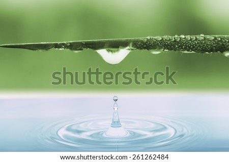 Water drops from leaves grass of green  background - stock photo