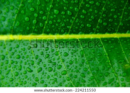 water drops in a wet leaf of a plant. Freshness concept - stock photo
