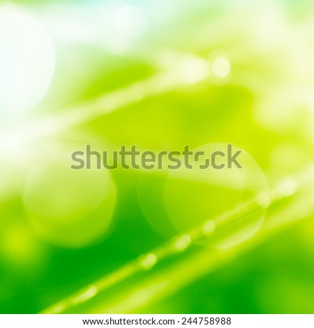 water drops in morning light - stock photo