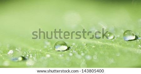 Water drops on a green leaf with shallow DOF - stock photo