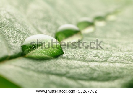 water drops on a leaf - stock photo