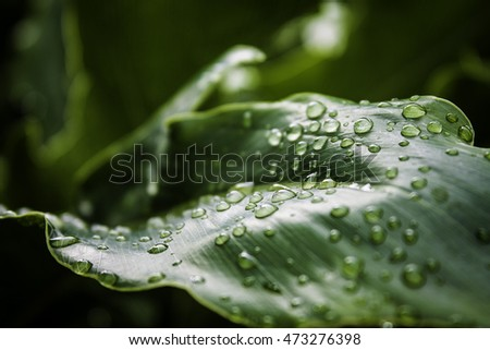 water drops on a leaf, color