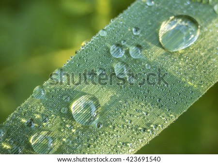 water drops on a leaf in the early morning by a lake - stock photo