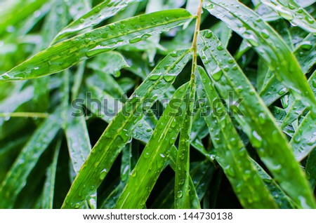 Water drops on fresh green leaf plant in the garden , close up details