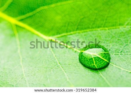 Water drops on fresh green leaf. studio shot - stock photo