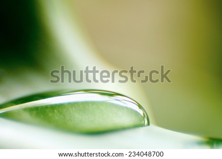 Water drops on fresh green leaves - stock photo
