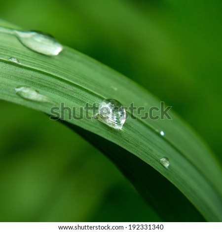 Water drops on fresh green spring grass