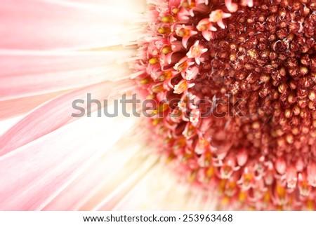 Water drops on gerbera petals, close-up - stock photo