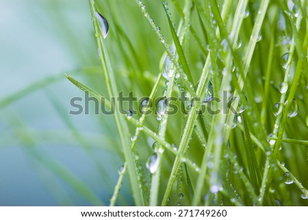 Water drops on grass - stock photo
