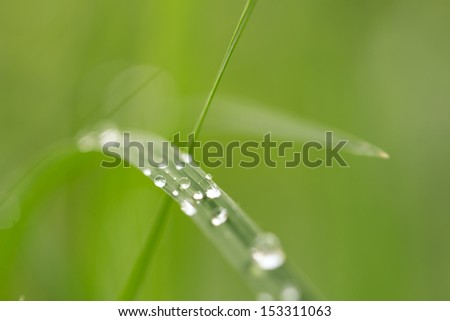 water drops on grass in nature with beautiful bokeh