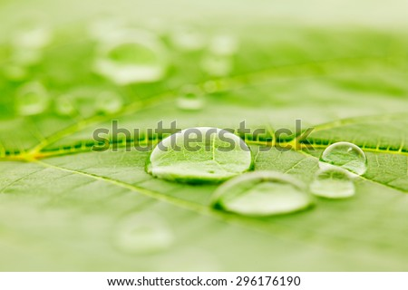 Water drops on green fresh leaf macro - stock photo