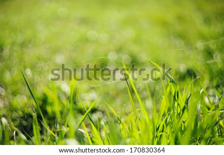 Water drops on green grass - shallow DOF - stock photo