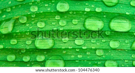 water drops on green leaf background - stock photo
