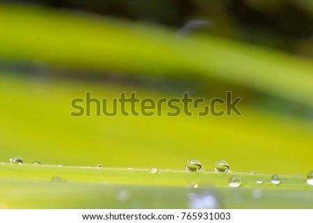 Water drops on green leave